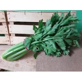 Sedano Verde