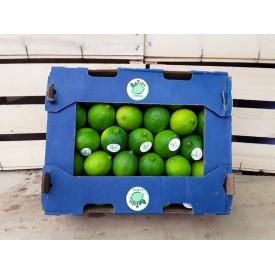 Limes Foto 2