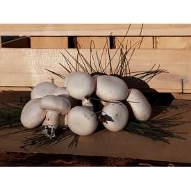 Funghi Champignon - 500 Gr.