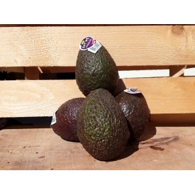 Avocado 1 frutto