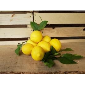 Limoni In Foglia 500 Gr