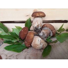 Funghi Porcini - 500 Gr.
