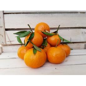 Mandarini - 1 Kg