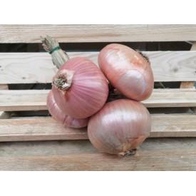Cipolle di Montoro - 1 Kg