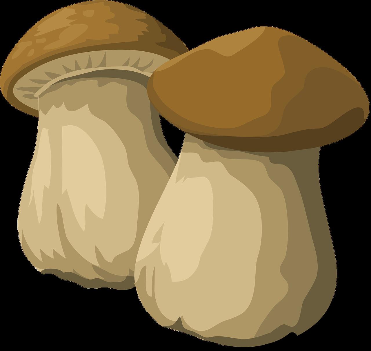 Icona Funghi Porcini