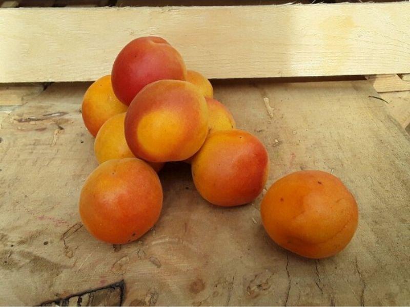 Albicocche Cassetta Piccola di Frutta