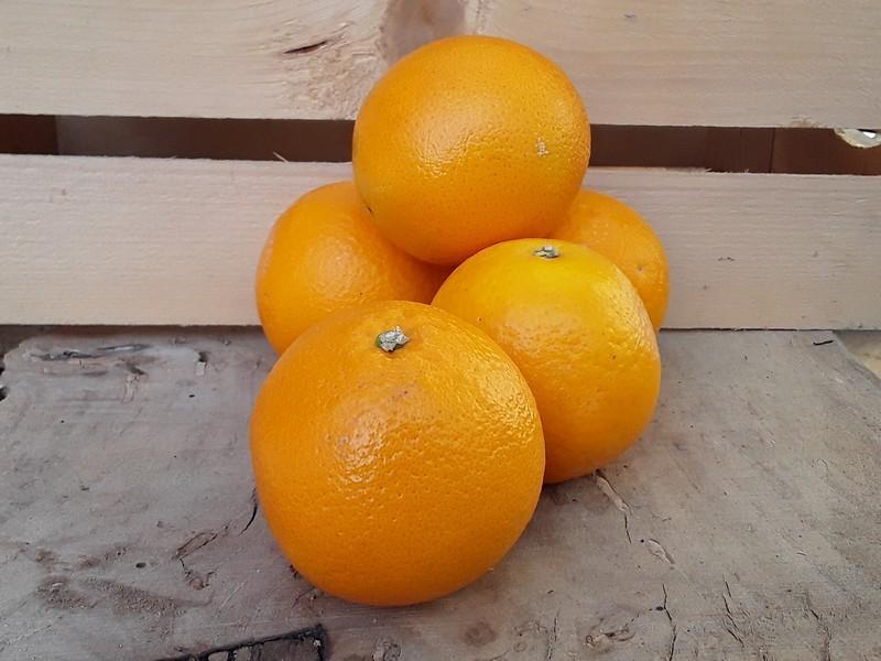 Arance Cassetta Grande di Frutta