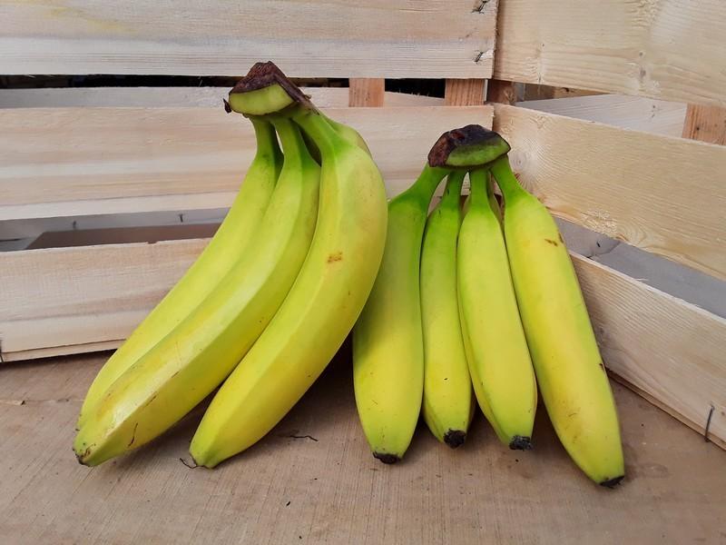 Banane Cassetta Piccola di Frutta