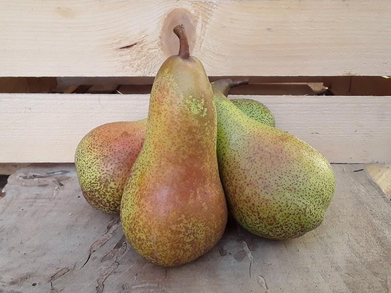 Pere Cassetta Piccola di Frutta
