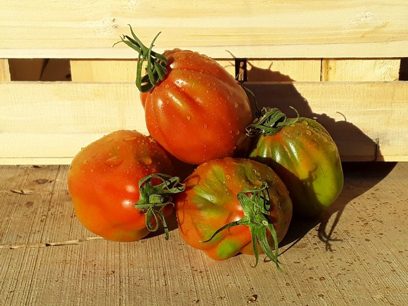 Pomodori Cuore di Bue Cassetta Grande di Verdura